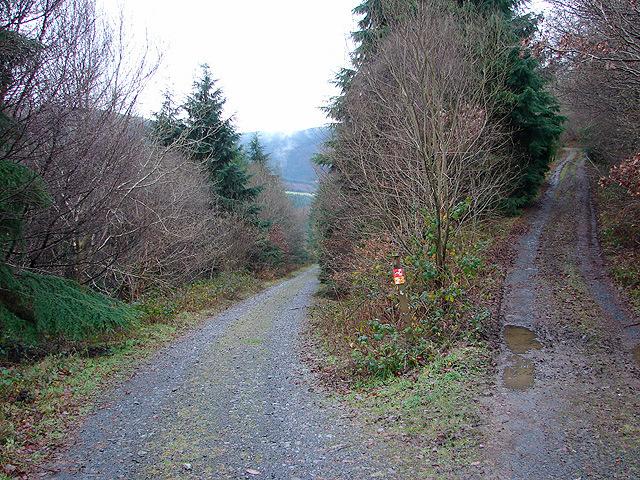 Track junction near Coed yr Allt fawr
