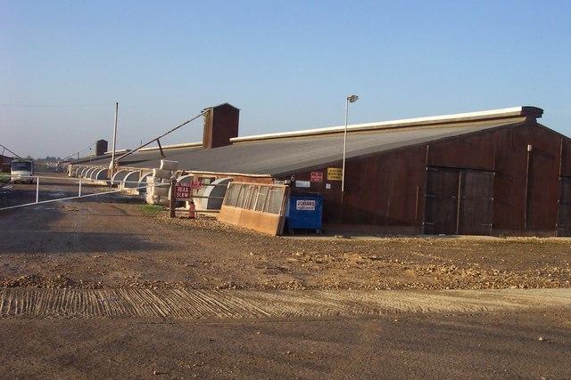 Gedney Hill Poultry Farm