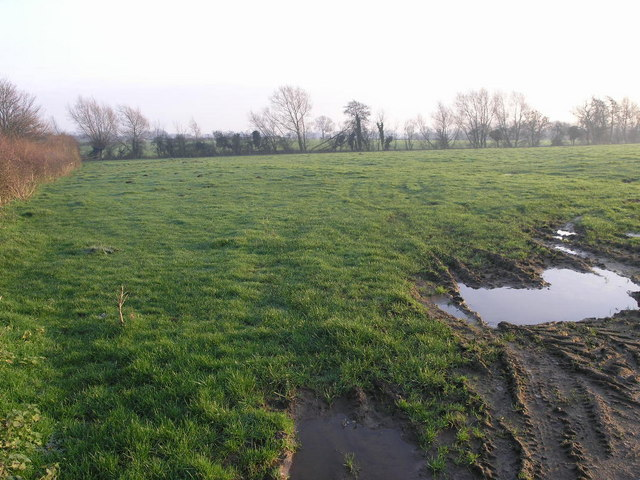 Wet Field and Brook