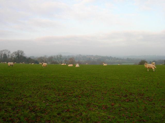 Broomershill
