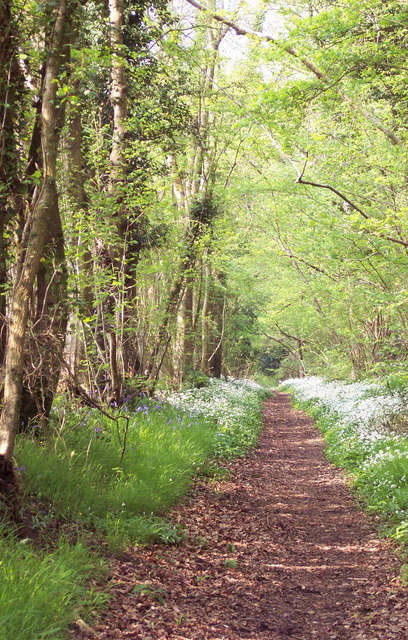 Bridleway Bordered with Wild Garlic