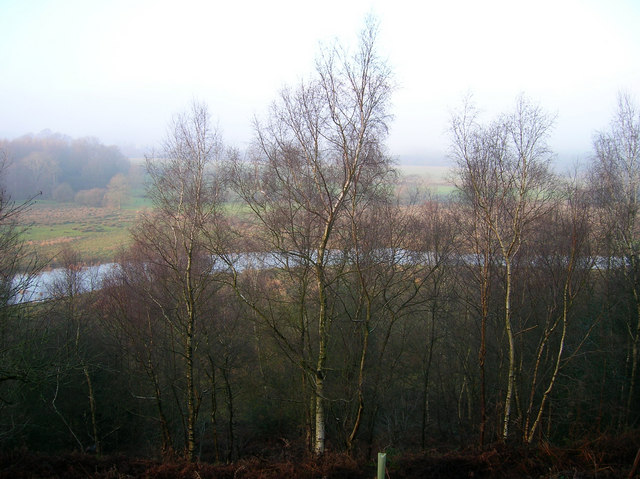 River Arun from Pulborough Park Plantation