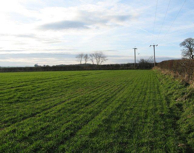 Winter crops, Paxton