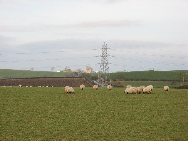 Sheep, Ramrig