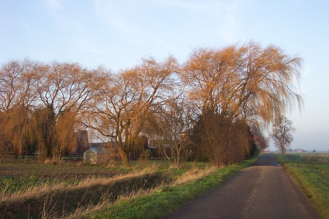 Wonderful willows