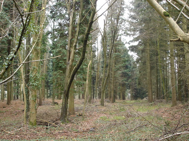 Inside Queen's Copse