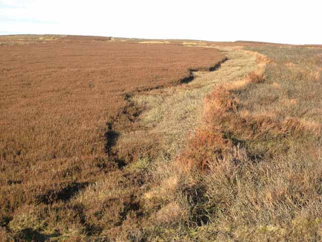 Grouse moor management, Crawleyside