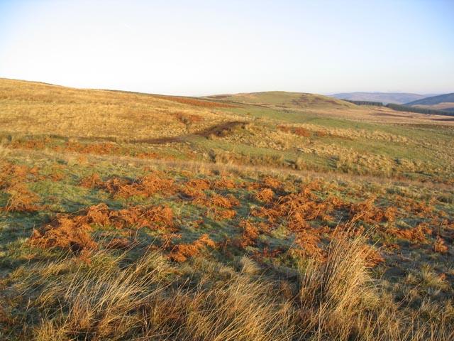 Hill grazing