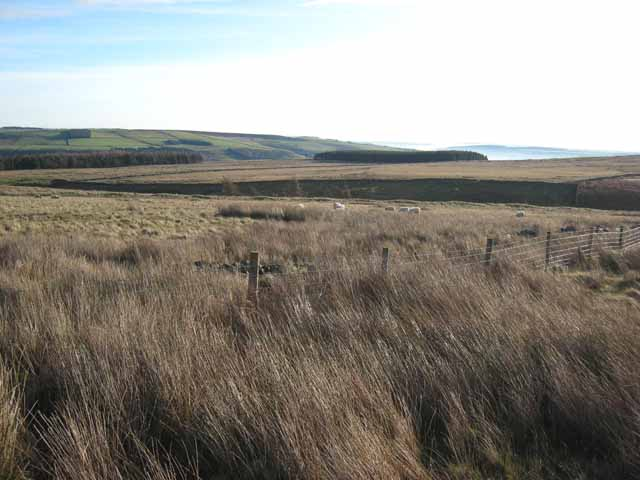 Moorland near Catchwater Plantation