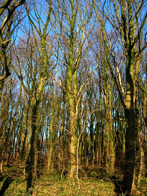 Wood Near Brieryside