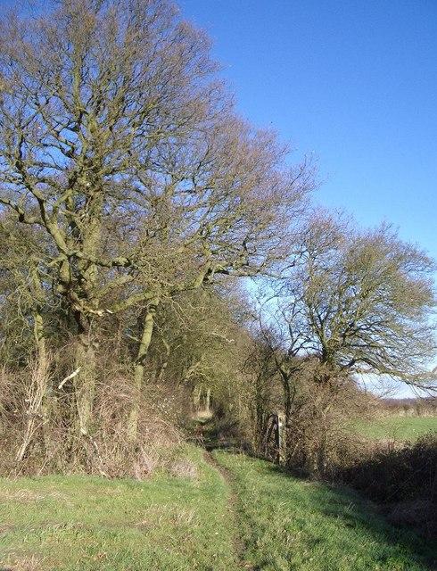 Three Shire Bridleway & the Fir Tree Planting