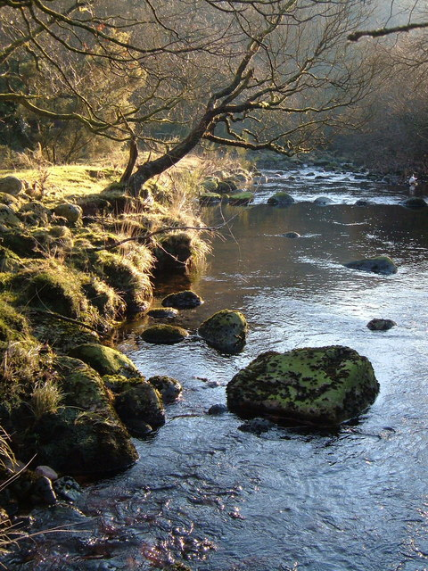 Tavy and stepping stones
