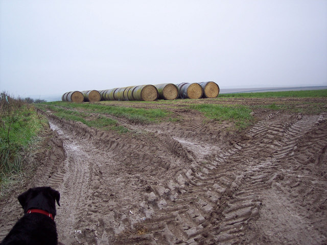 Tractor Tracks and Winter Feed