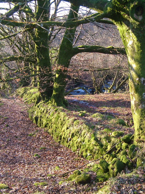 Field boundary and the Tavy