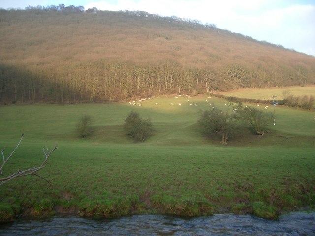 Brineddin Wood