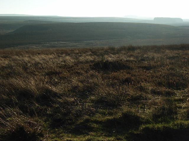 Moorland above Allendale