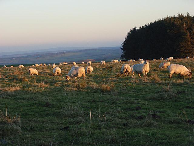 Pasture, Eshells
