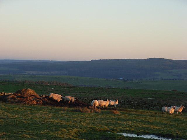 Pastures, Eshell