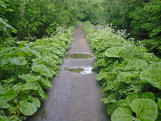 Cromford Canal Footpath Greenery