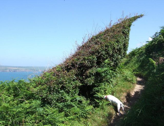 Wind topiary, Dinas Island