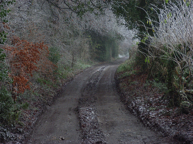 Digberry Lane