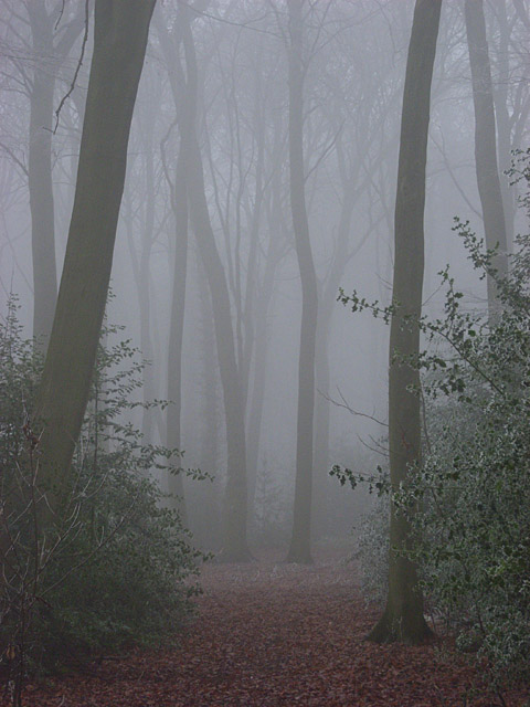 Howe Wood in fog