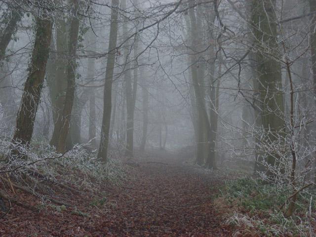 Howe Wood in fog