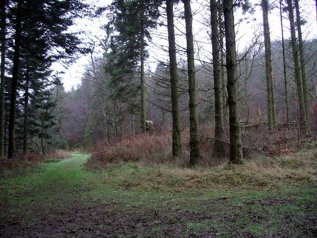 Paths converge, Woodcockair