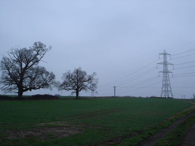 Farmland on Petersham Farm