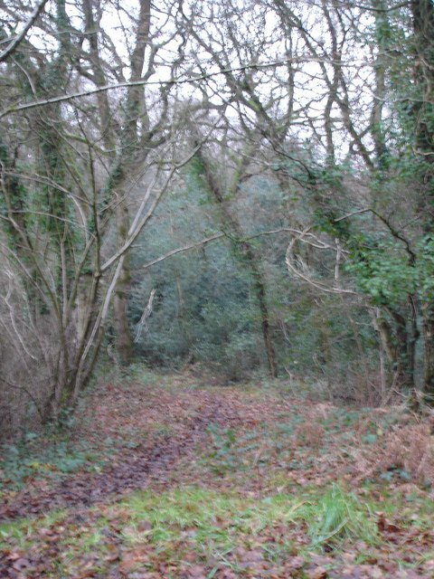 Holt Forest