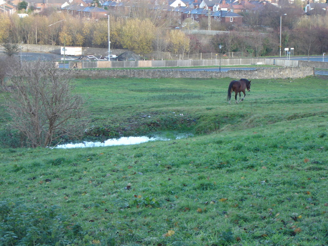 Horse field north of St Mary's church in Mold