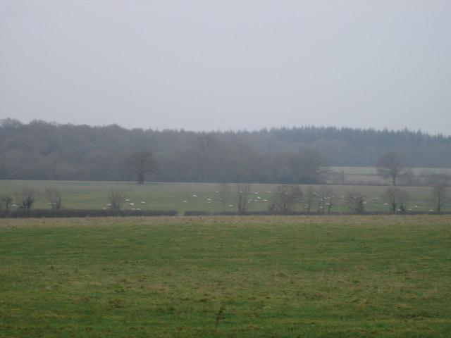 Farmland near Paradise Farm