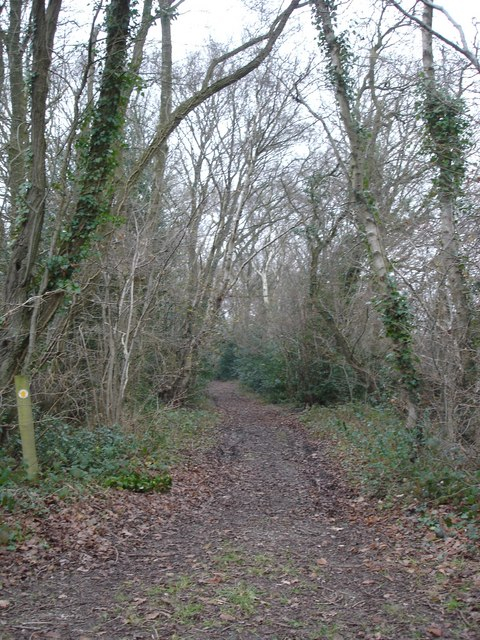 Woodland path near Holt Heath