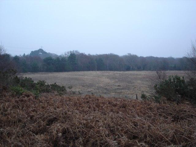 Open land on Holt Heath