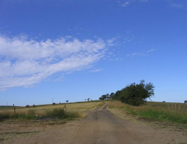 Roman road to Vindolanda