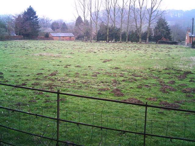 Mole hills menace
