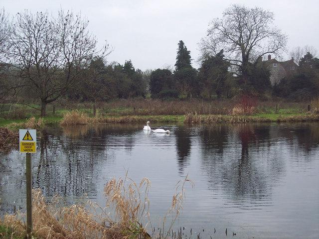 Swans on Fishing Lake