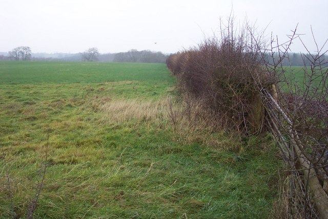 Hedge and field towards Woolpitch Wood