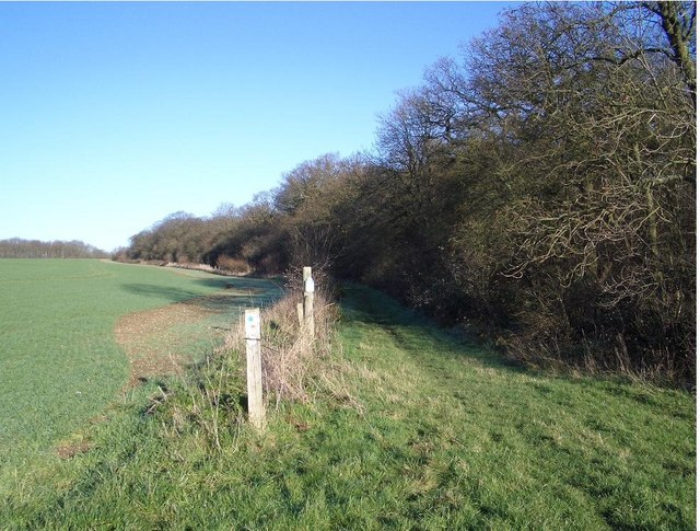 The Bridleway beside Three Shire Wood