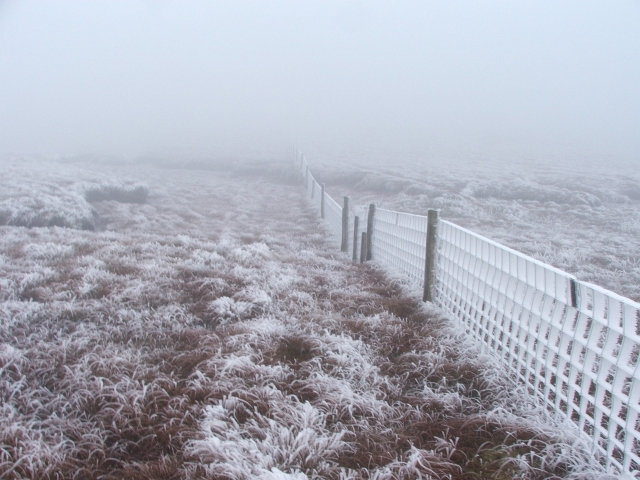 Frozen Fence near Bull Bogs.