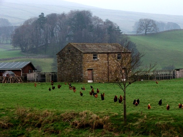 Barn and Hens near Hawes.