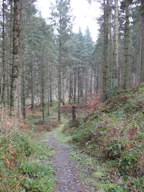 Woodland and River Esk