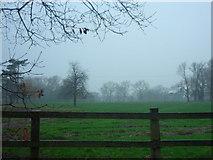 SJ5365 : Muddy field near Willington Hall Hotel. by Felix Hemsted