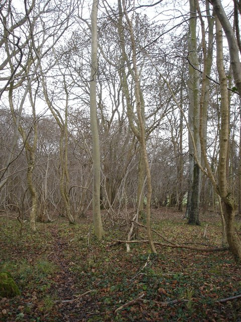 Hatts Coppice