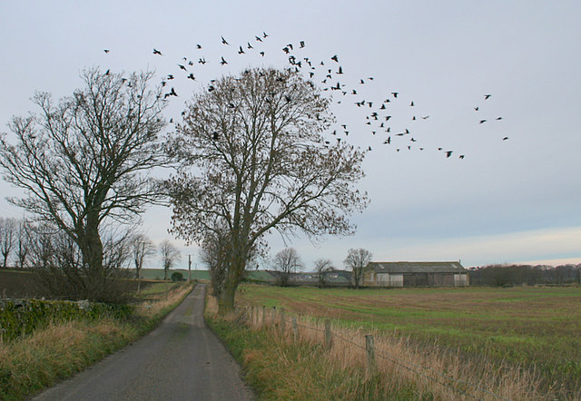 Rooks off to roost by Earnside Farm