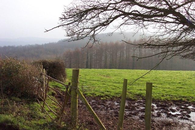View to Cae-yr-uchain Plantation