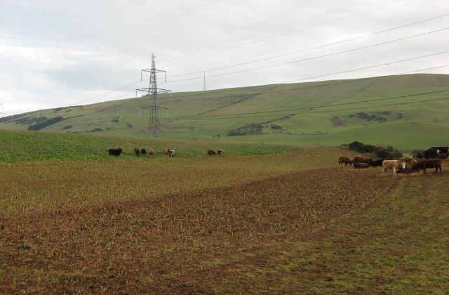 Turnip field, Thurston Mains