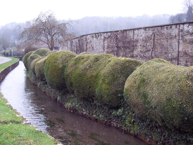 Stream, Hedge and Wall