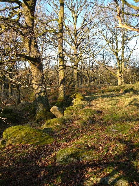 Woodland at Standon Steps