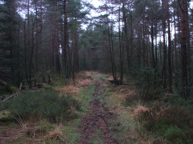 Forestry Path.